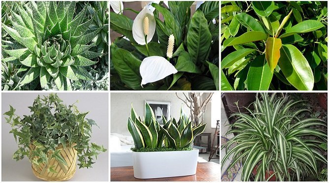 These Plants Are Oxygen Bombs Clean The Air At Your Home ...